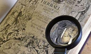 Shakespeare portrait claimed in illustration John Gerard The Herball