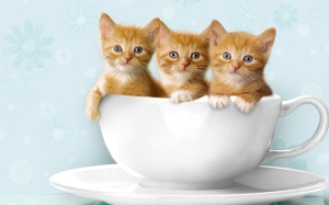 Cats may not be your cup of tea, but you have to admit, these three are sweet as honey